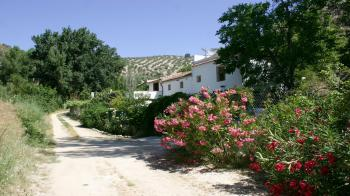 Algarinejo country property